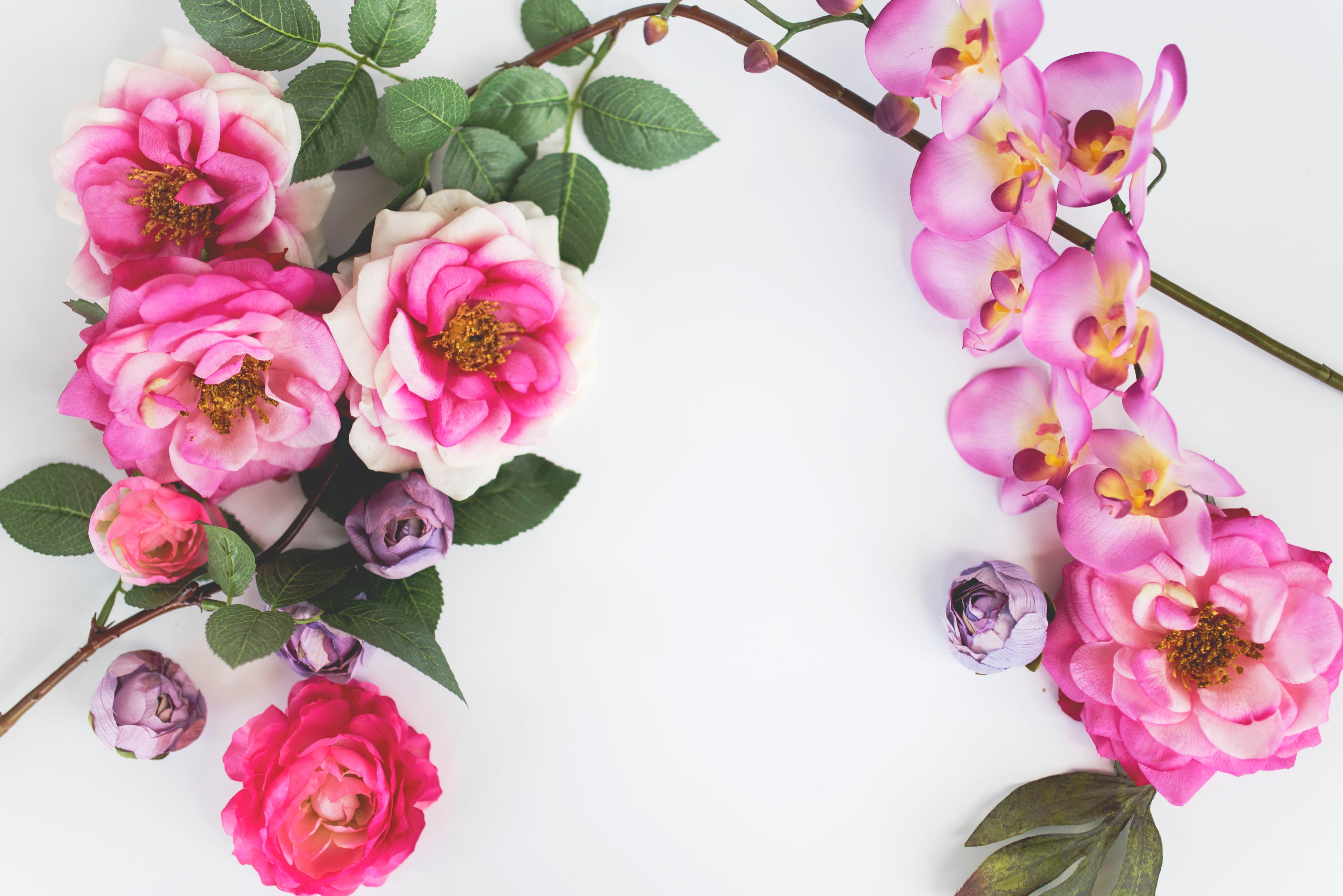 春らしいお花