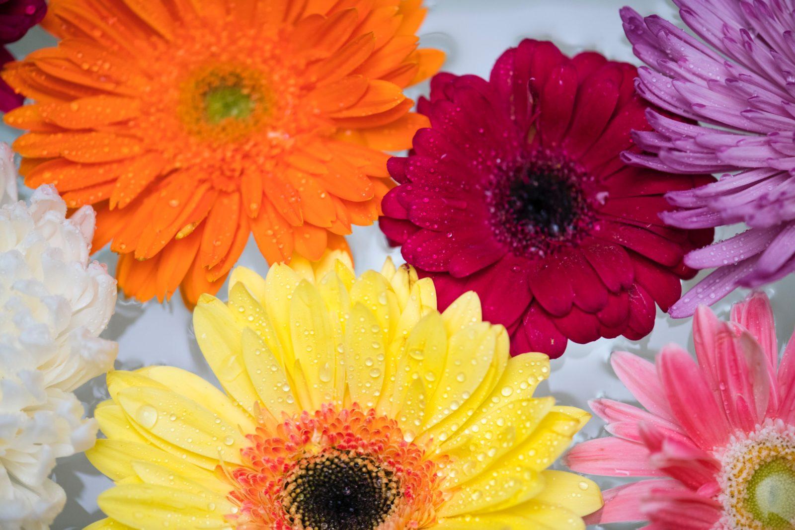 【色彩学】暖色系を使って目に止まる売り場(vmd)を作るコツ